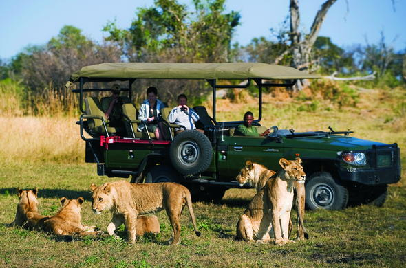 See lions on a game drive on your Botswana safari.
